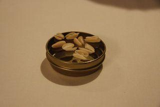 Pine nut shells